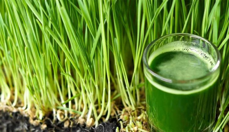 Best Wheatgrass Juicers Featured